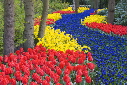 flowers-route_05