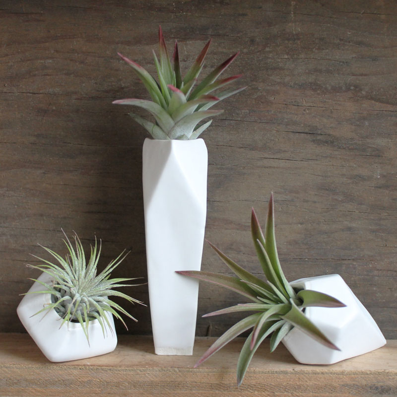 airplant-holders_250516_04