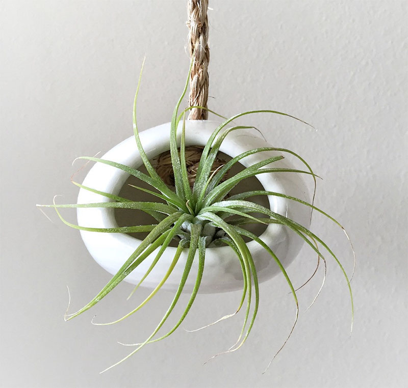 airplant-holders_250516_09
