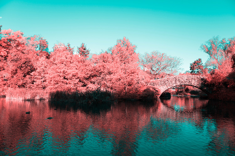paolo-pettigiani-infrared-new-york-3